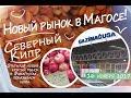 Северный Кипр - Новый рынок в Фамагусте! - 16 ноября 2017