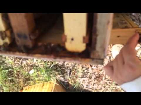 Bee hive killed by pesticide