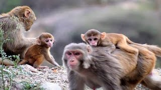 Stop Monkeys from Destroying your garden!