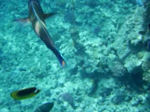 Makadi Palace Grand Makadi Beach Agypten Hurghada Egypt Schnorcheln Snorkeling Youtube