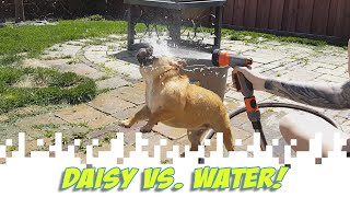 Daisy vs. Water! (I Still Have Trouble Calling It A Vlog)