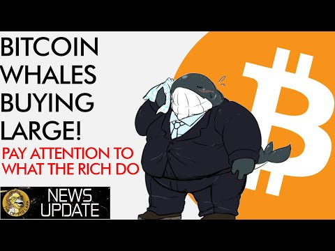 Bitcoin Whales Buying Big! Pay ATTENTION To What The Rich Do