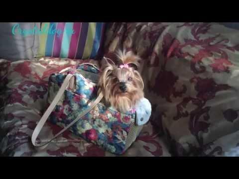Сумки переноски для собак ROSE летние (1504 LD)