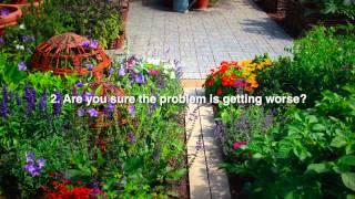 Best Homemade Insecticides for Your Garden