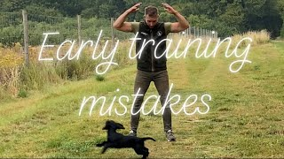 Early training problems working Cocker Springer Spaniel gundog training tips tricks