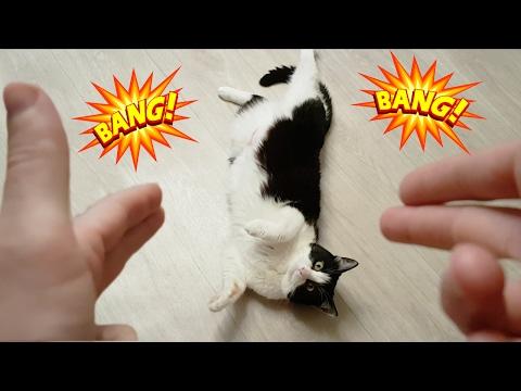 CAT PLAYS DEAD AFTER A FINGER SHOT!