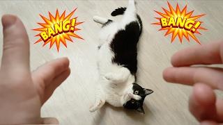 cat plays dead after a finger shot