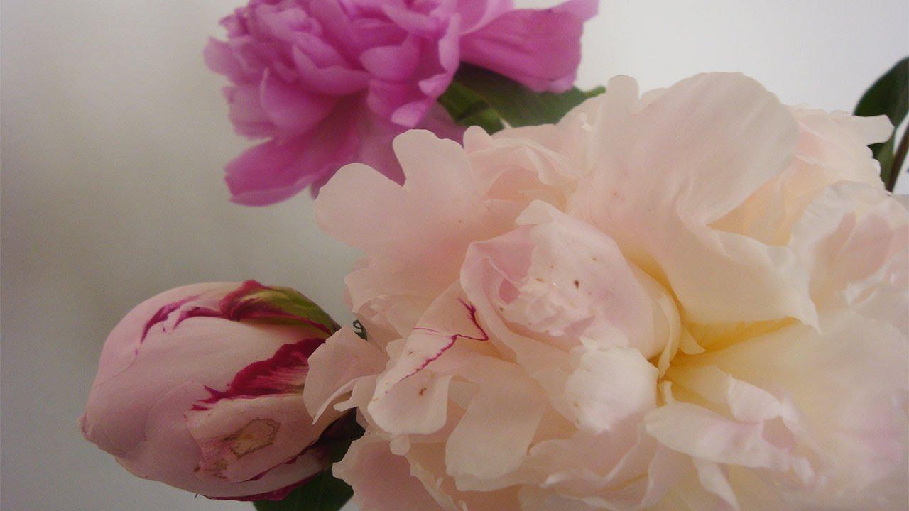 pfingstrosen in der vase 8 tipps deko ideen mit flora shop youtube. Black Bedroom Furniture Sets. Home Design Ideas
