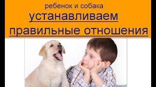 ребенок и собака устанавливаем правильные отношения  как подружить ребенка и собаку