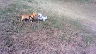 Ace And Kugula Run 2010