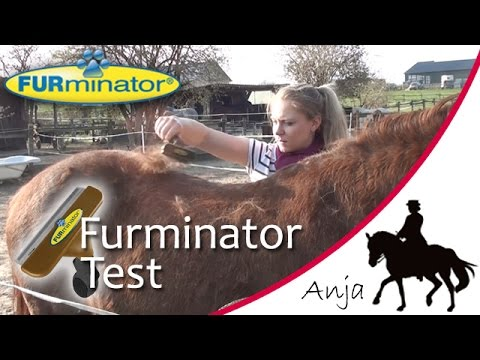 Ich teste den FURminator an Solido & Bella!