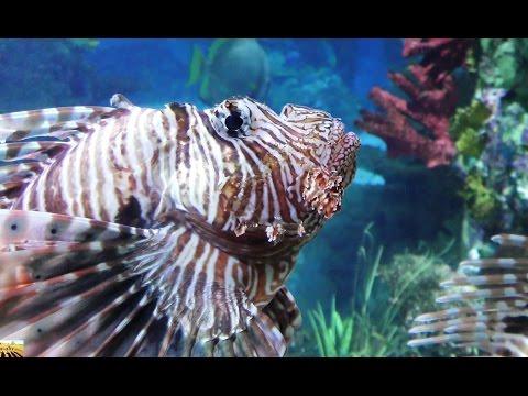 Tropical & Interesting Animals movie. 4K resolution by Panasonic HC-WX970 ULTRA HD WasabySajado