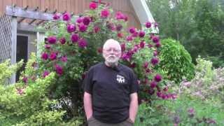 The Garden Before Tropical Storm Arthur