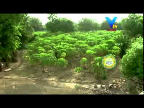 SAJIV KHETI - ORGANIC FARMING