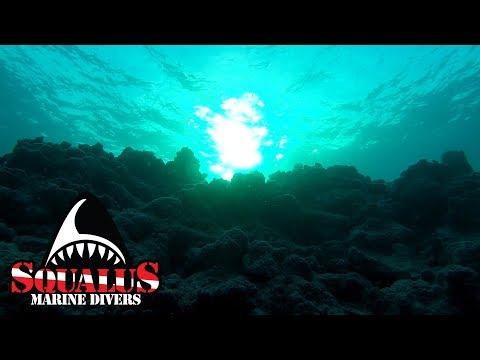 EXPLORING CONCH REEF FLORIDA KEYS -SQUALUS MARINE DIVERS