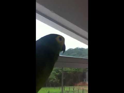 Papagaio Vai toma no cu kkkkkkk