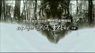 EBS 자연 다큐멘터리_야생의 조선곡 호랑이 1부