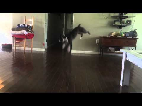Rose does backflips!