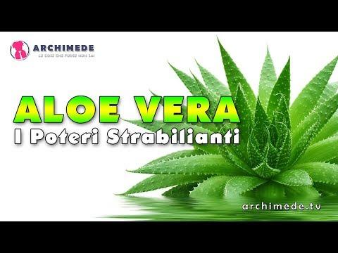 Aloe Vera: I Poteri Curativi Strabilianti!