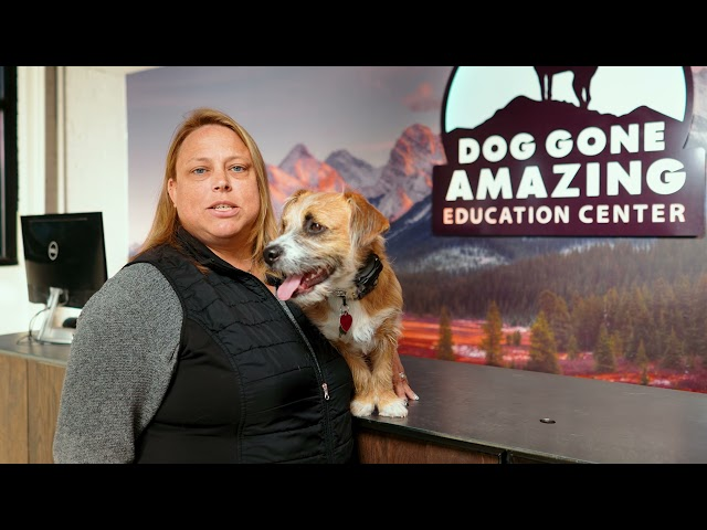 Dog Gone Amazing - Dog Training Testimonial for Baxter