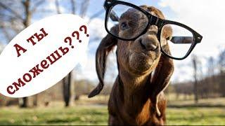 Проверка чувства юмора и знания животного мира ... А Вы сможете???