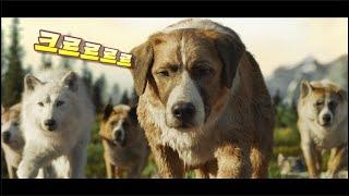 늑대들까지 짱먹어버리는 상위 1%강아지의 정체