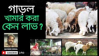 ছাগল ও ভেড়ার চেয়ে উন্নত জাতের গাড়ল খামার করা লাভজনক, sheep farm, भेड़ खेत, مزرعة لتربية الأغنام