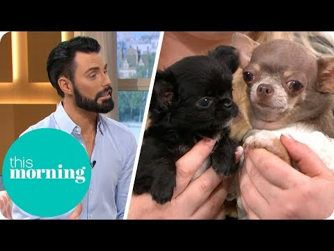 Is It Cruel to Breed Teacup Dogs? | This Morning