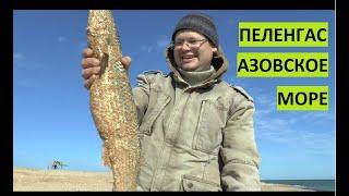Ловля пеленгаса Азовское море
