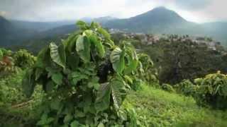 コロンビアコーヒー産地の再生