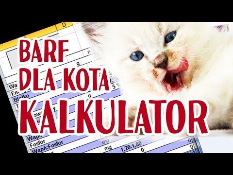 dieta barf dla kota przepis