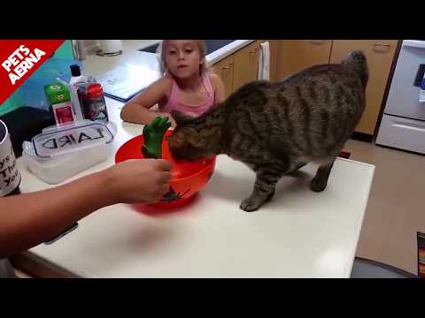 FUNNIEST & SCARED CATS VIDEO COMPILATION 2020