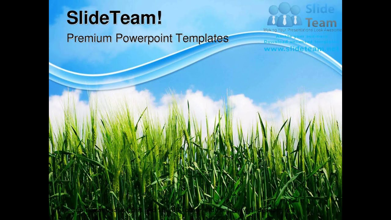 Green Wheat Plant Nature Powerpoint Templates Themes And