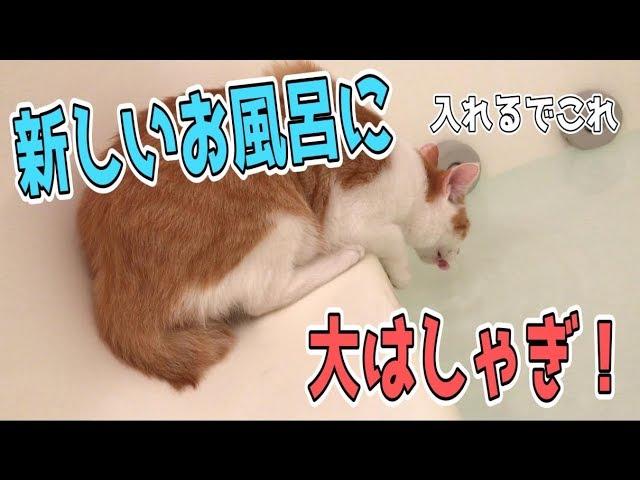 【新居】新しいお風呂に猫たち大興奮!湯船の中にどんどん飛び込む!?