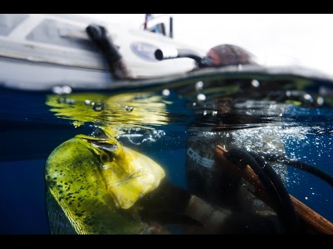 Spearfishing Malibu to Mexico