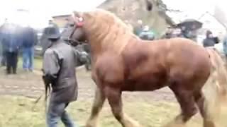 аукцион лошадей 04