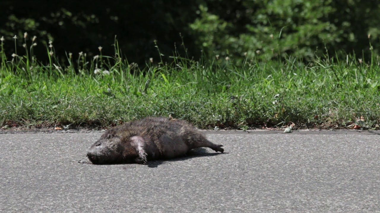 South Marginal Road (Groundhog)