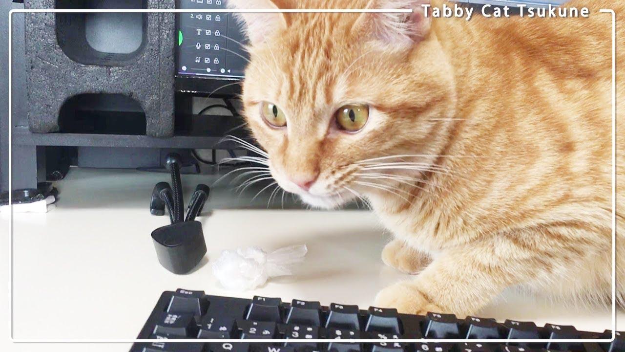 猫が大好き袋の【カサカサ】何度も咥えて持ってくる(編集できないよ~w)