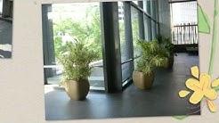 Foliage Design Jacksonville FL Interior Office Plant Service Jacksonville FL & Indoor Plantscape