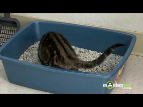 Cat Behavior - Litter Box Problems