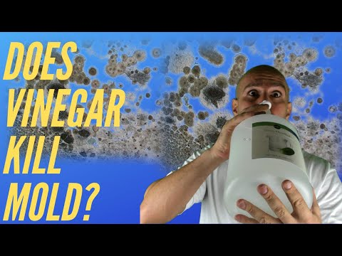 does-vinegar-kill-mold?-watch-this-before-you-use-it...