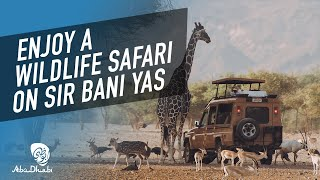 Experience the call of the wild at Sir Bani Yas Is...