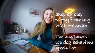 The Word of Dog Vlog : Step by step professional puppy training S1E2