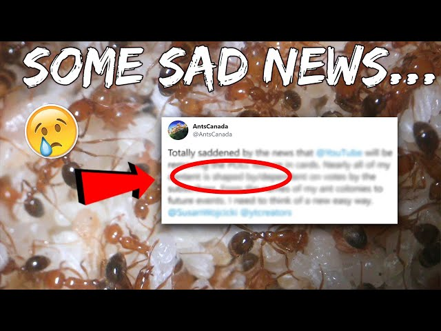 SOME SAD NEWS | UPDATE ON MY ANTS & THE CHANNEL