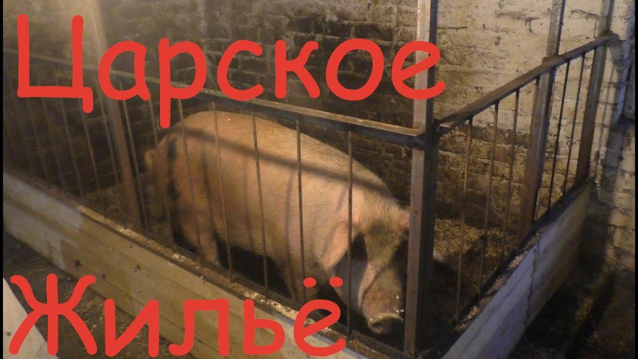 Царское жильё для свиноматки//Жизнь в деревне//Деревня