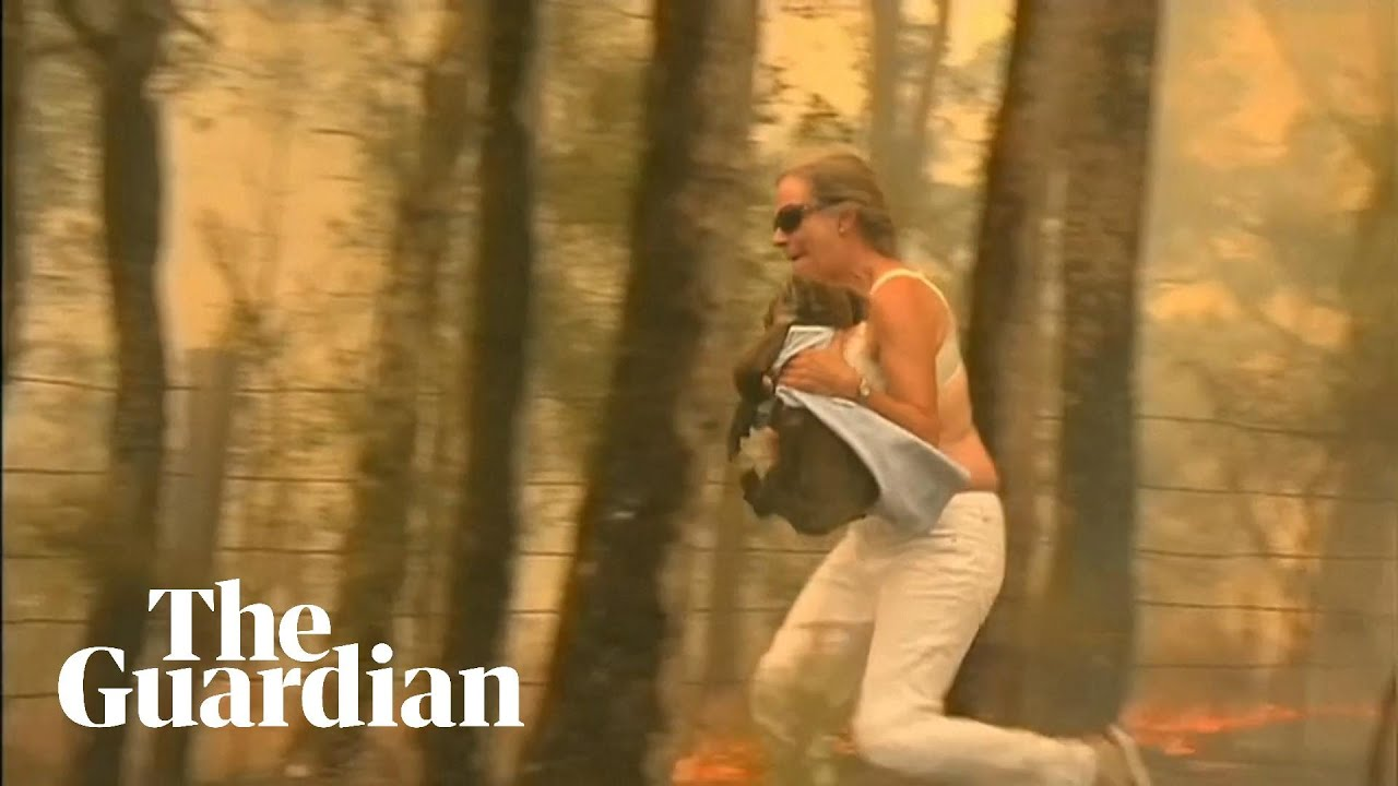 Woman rescues koala from bushfire in New South Wales