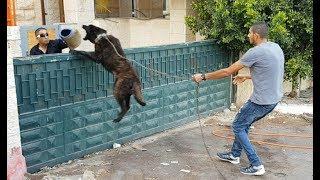 الدخول لقفص كلب الذيب المجنون لاول مره ومن سيدخل مع جمال العمواسي
