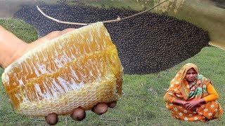 Harvesting Honey From Honeycomb !!! Honey Chicken Recipe – Honey Harvest from Giant Honeybees