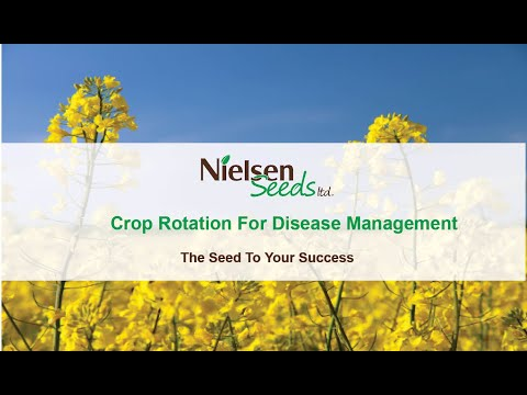 Crop Rotation for Disease Management with David Kaminski