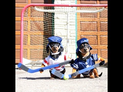 Ball Hockey Match For The Most Active Pups!